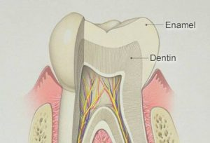 importance of tooth enamel