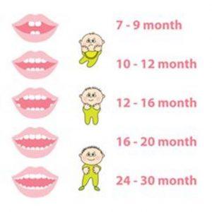 teething schedule